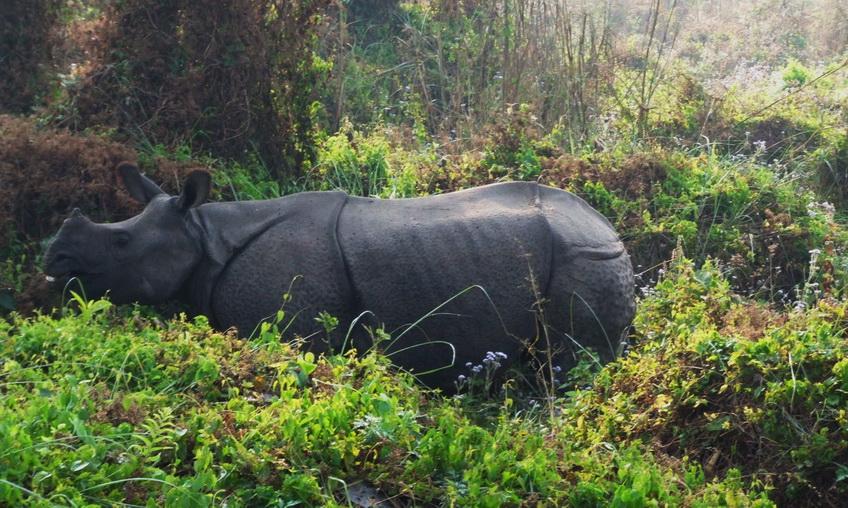 Chitwan-Jungle-Safari-8