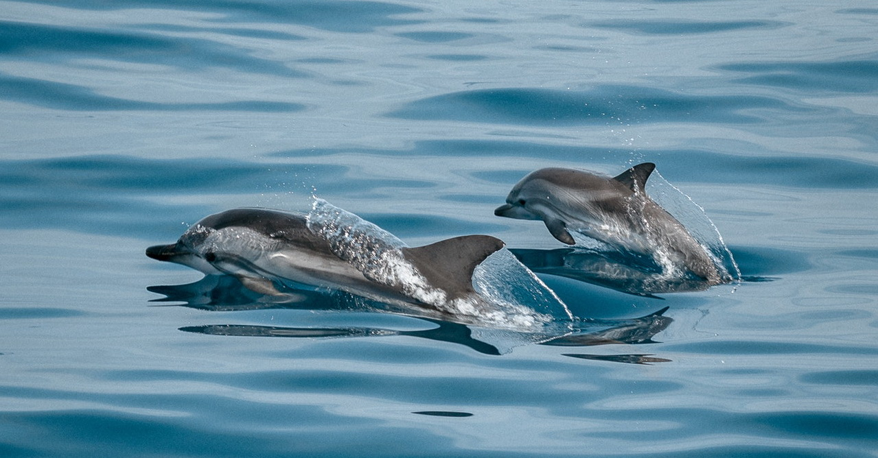 Explorer Bali with Dolphin Tour